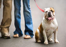 WALKING-the-dog