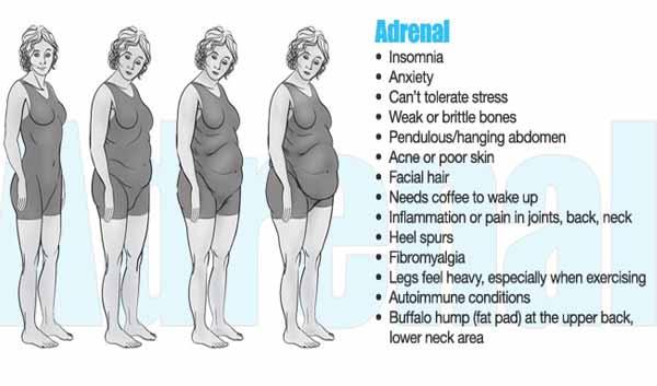 adrenal-1