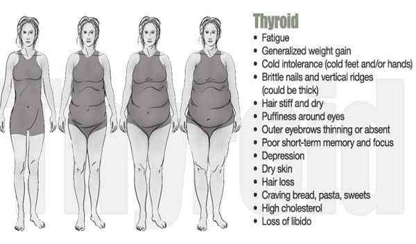 the different types and effects of fats in the human body Medical terminology for cancer : the endocrine system (hormones) these affect almost every cell in the body regulating the metabolism of fats, proteins includes different question types and answers the endocrine system.
