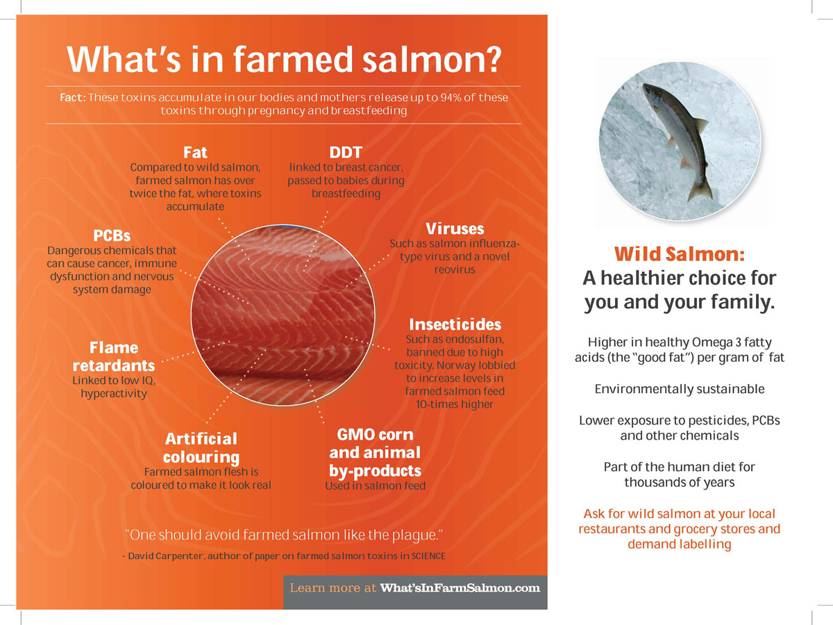 farmed-salmon-2
