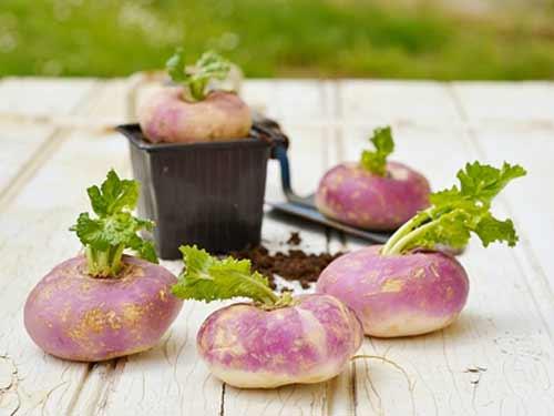 turnips-1
