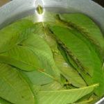 Guava Leaves Can Stop Hair Loss And Make It Grow Fast